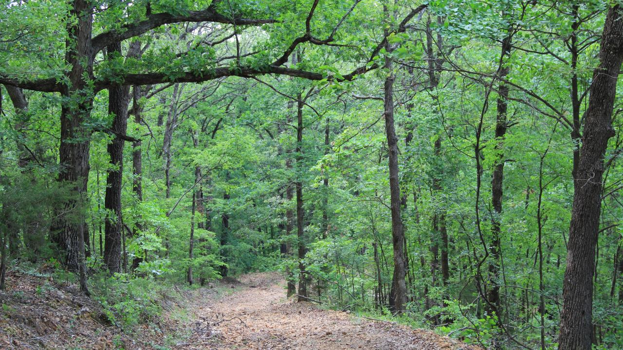 Wooded path at Devil's Eyebrow Natural Area near Gateway in Northwest Arkansas