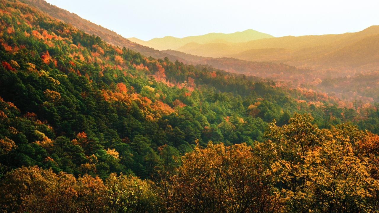 Fall color in the Ouachita National Forest
