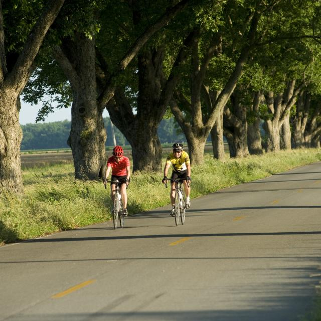 Cyclists in Scott