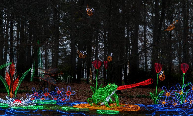 Garvan Woodland Gardens Holiday Lights