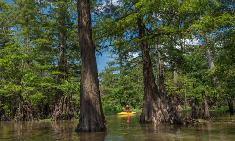 Bayou Bartholomew is the longest bayou in the world