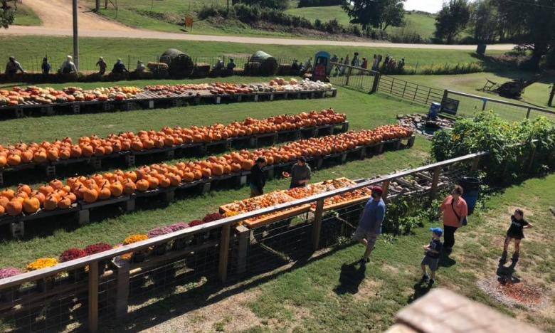 Have some fall fun at Pumpkin Hollow