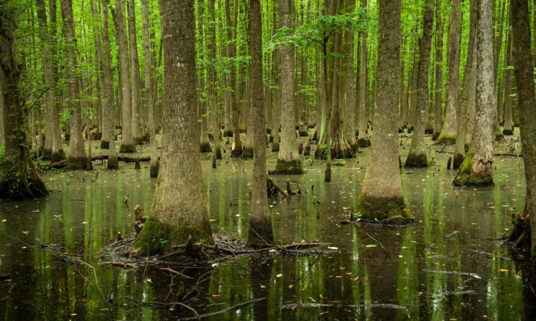 Explore a rare headwater swamp at Louisiana Purchase State Park and Natural Area