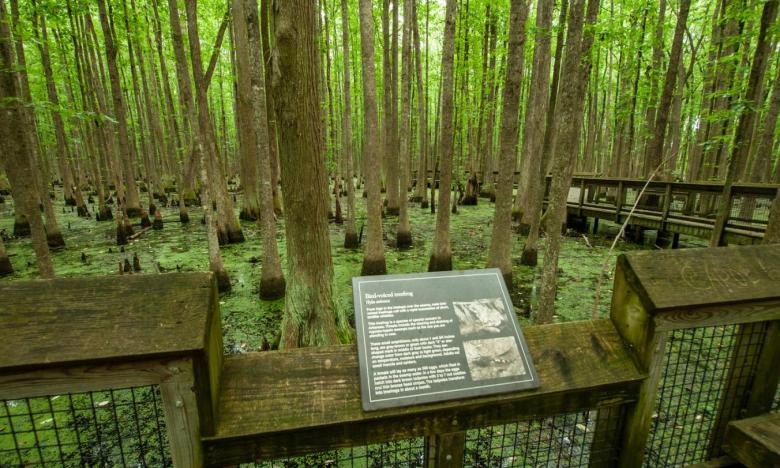 Learn more about the flora and fauna found at Lousiana Purchase State Park and Natural Area