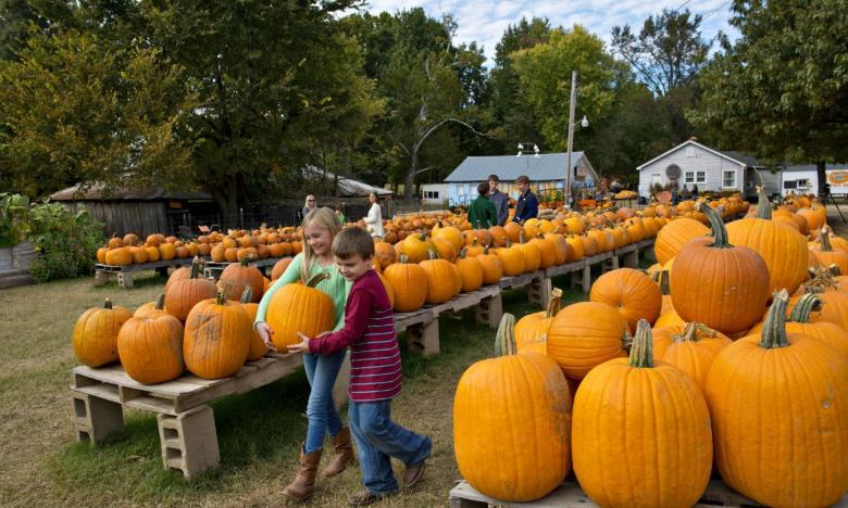 You'll find pumpkins galore at Pumpkin Hollow