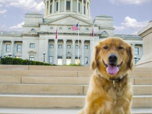 Dog-Friendly Activities in Little Rock