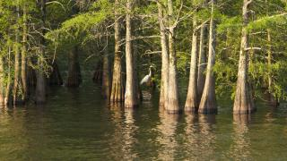 Lake Chicot State Park - Waterfowl