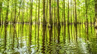 The St. Francis National Forest covers over 22,000 acres in the Lower Delta
