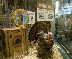 Turkey_Witt_Stephens_Jr._Central_Arkansas_Nature_Center_CJRW_010