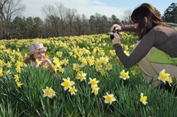 Wye_Mountain_Daffodils_Children_Mother_child_photo