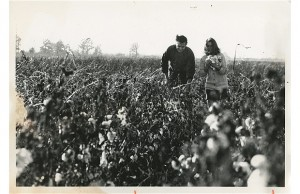 Johnny and June in a cotton field near Dyess