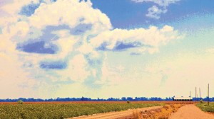Beans, Corn and Clouds by Norwood Creech