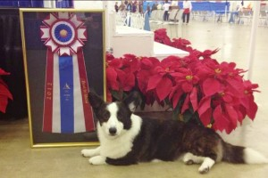 southeast arkansas kennel club4